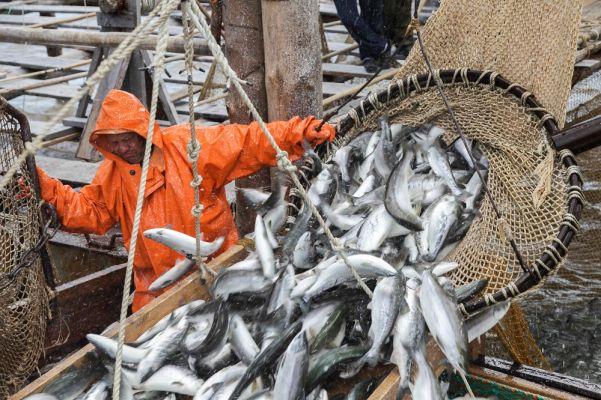 a63559724a2d0b28d08d3fb6f7cf7 Иностранцев попросят «навыход» изроссийских рыбодобывающих компаний